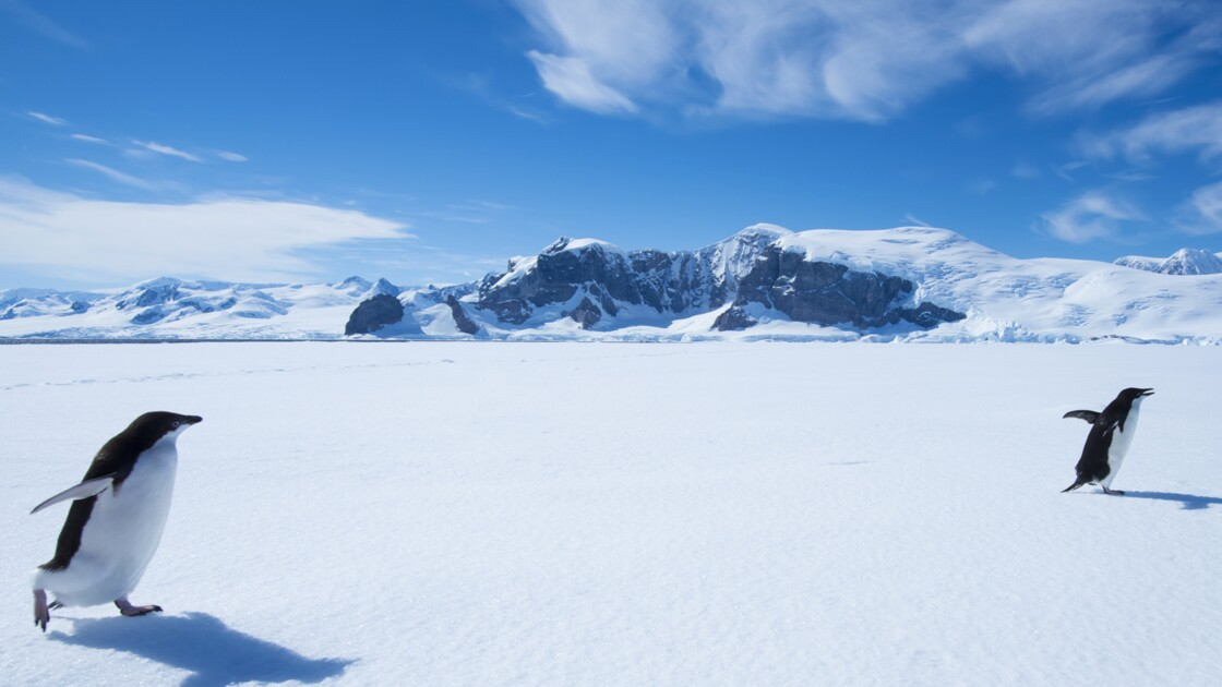 """Luc Jacquet : """"L'Antarctique est un vide qui vous incite à méditer"""""""