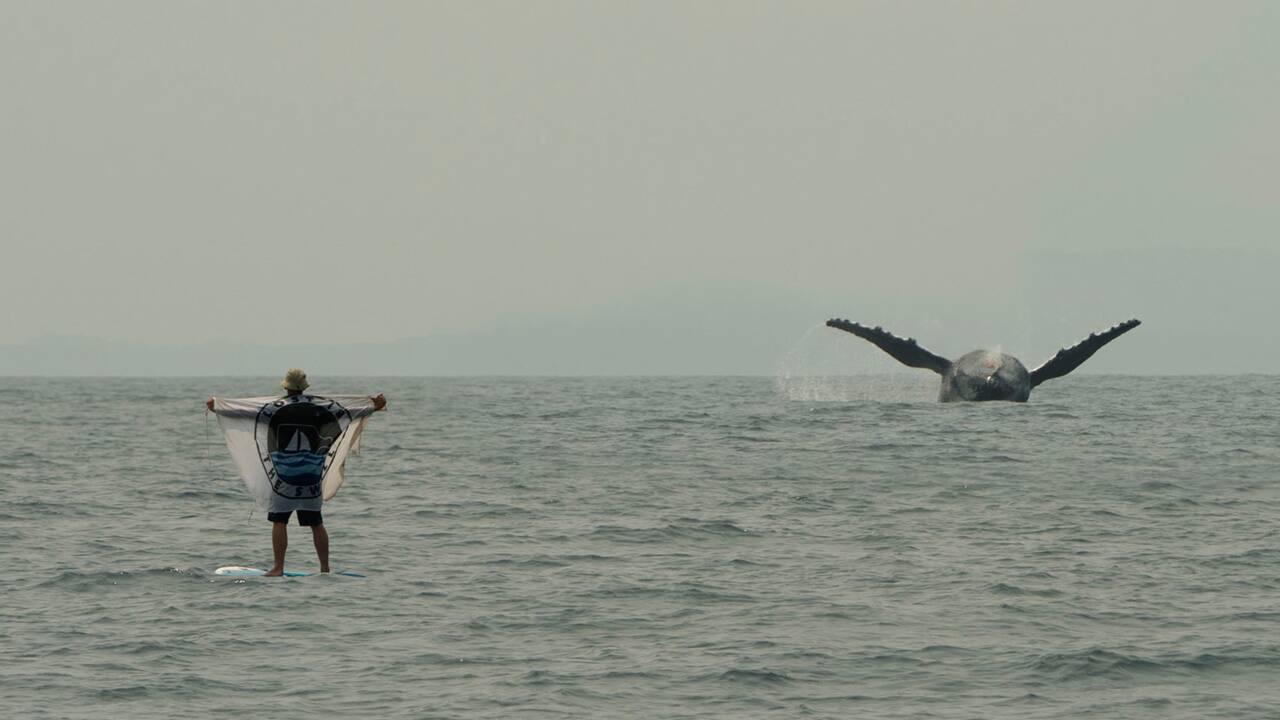 Danse avec les baleines dans les eaux du Gabon