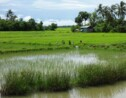 En Birmanie, au fil de l'Irrawaddy