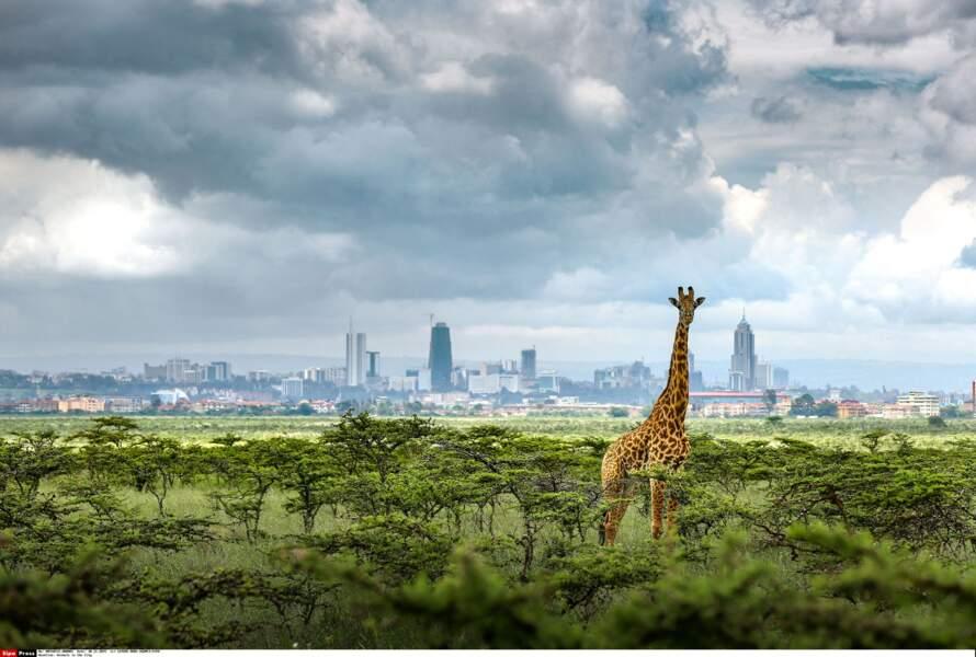 Nairobi, jungle urbaine