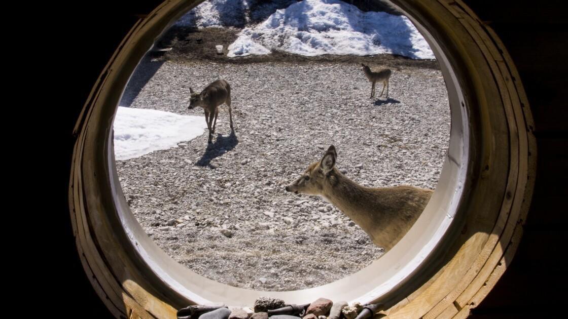 PHOTOS - Québec : Anticosti, l'île aux 200 000 Bambi