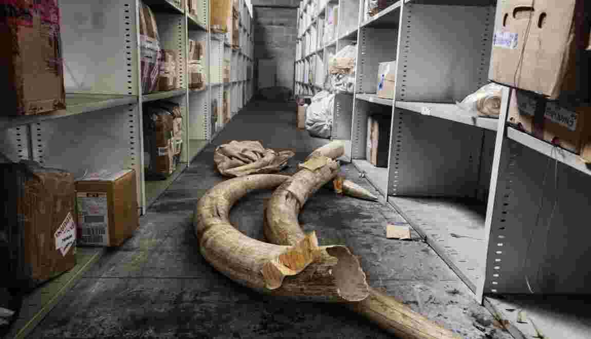 PHOTOS : Trafic d'animaux protégés, on a remonté la filière