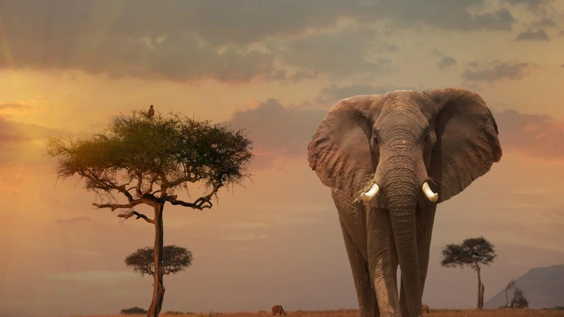 QUIZ - Que savez-vous de la faune sauvage au Kenya ?