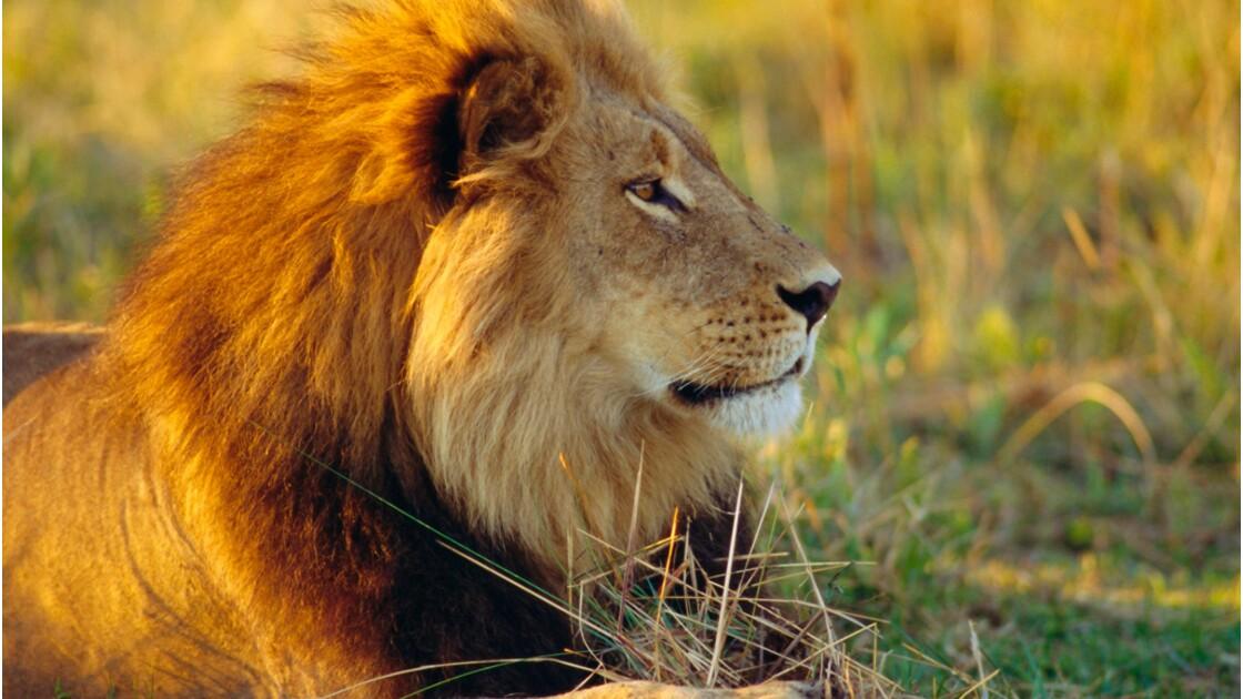 Animaux de la savane : testez vos connaissances