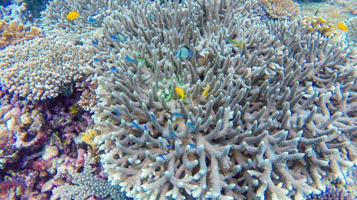 Palawan, haut lieu de la biodiversité marine