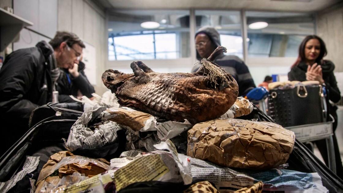 Trafic d'animaux protégés : on a remonté la filière