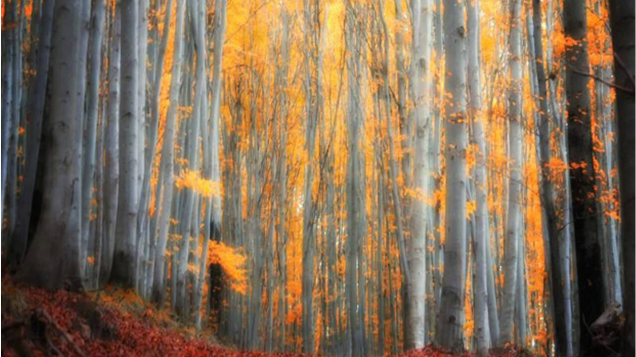 Couleurs d'automne : les plus belles photos de la Communauté