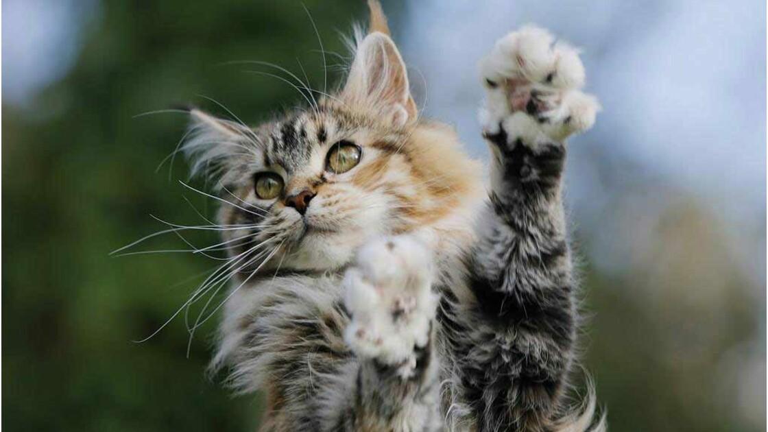 Le meilleur de la communauté : les plus belles photos de chats