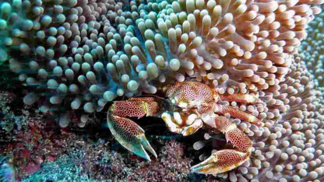 Plongée sous-marine : les plus belles photos de la Communauté