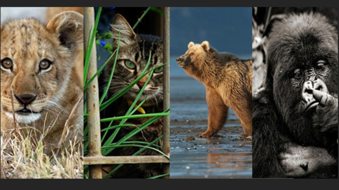 Grand concours photo GEO.fr - Spécial Animaux