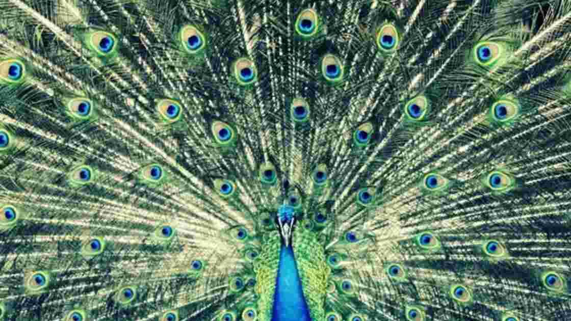 Concours Photo Animaux - La première sélection (du 16 au 23 novembre 2012)