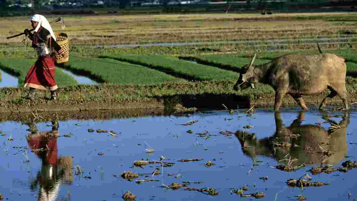 Crise alimentaire : des promesses mais pas d'argent