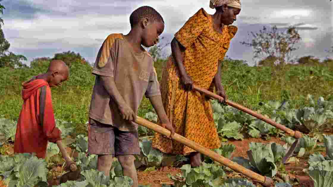 OPA des pays émergents sur les terres agricoles