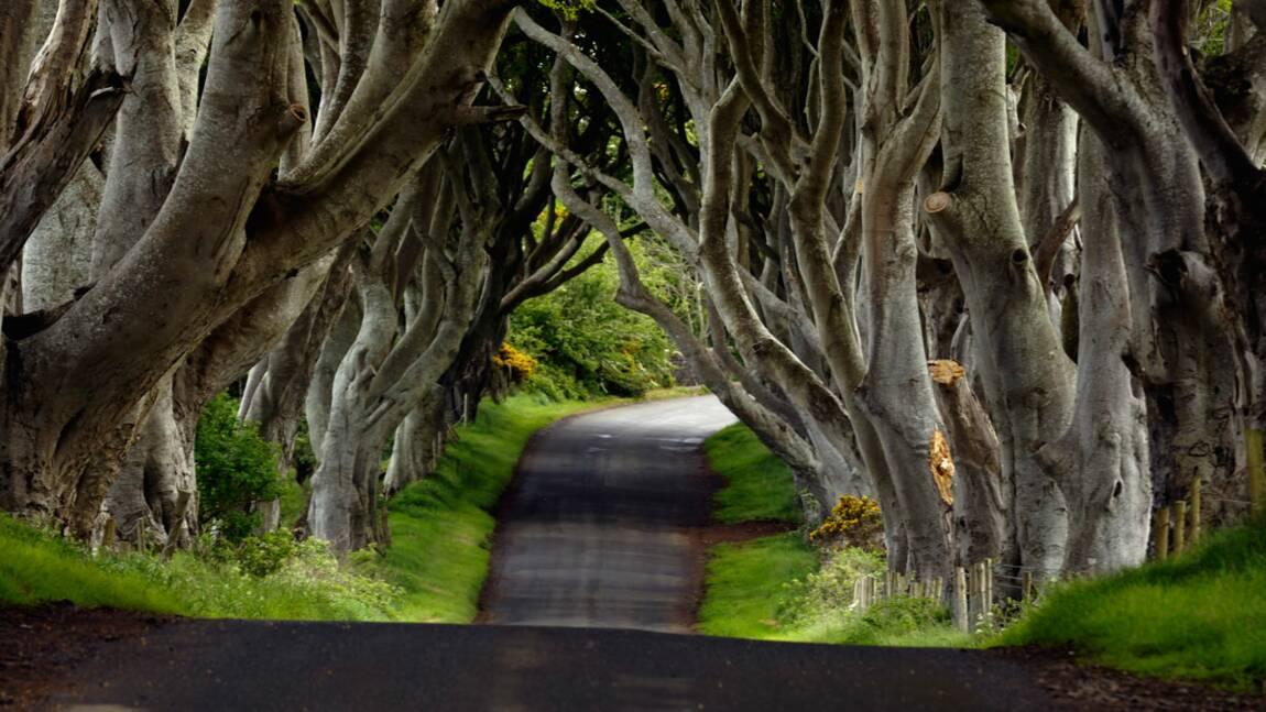 Sécurité routière : débat sur la dangerosité des arbres