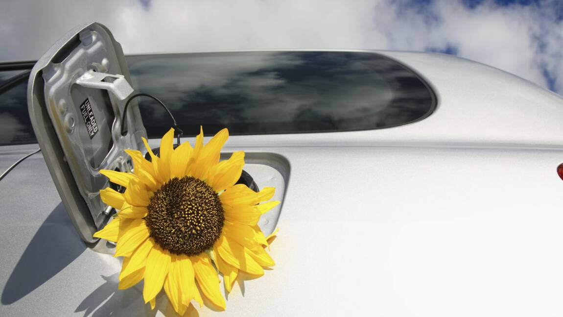 Un rapport relance le débat sur l'impact écologique des biocarburants