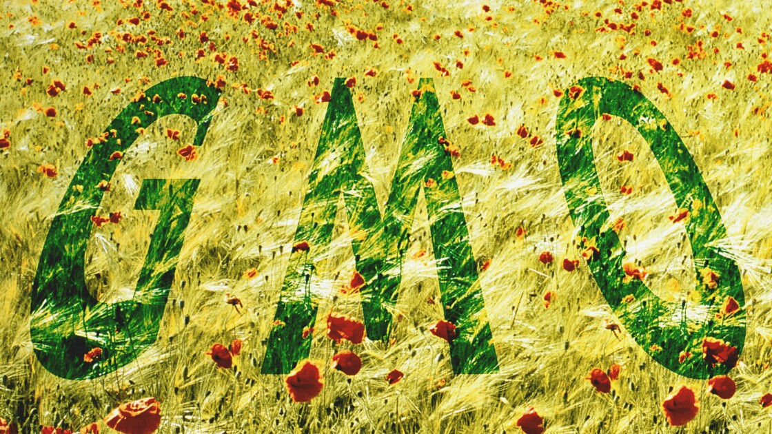 Des produits bio… aux OGM