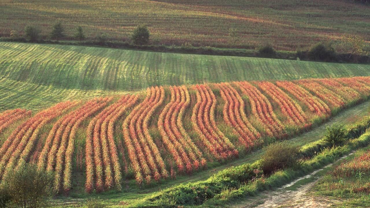 Contre la  culture des OGM en plein champ: le Conseil d'Etat soutient le Gers