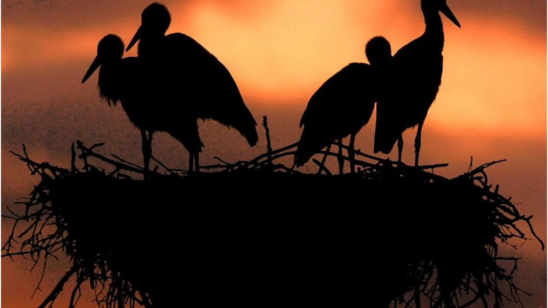 Les oiseaux reprennent du poil de la bête mais souffrent du réchauffement