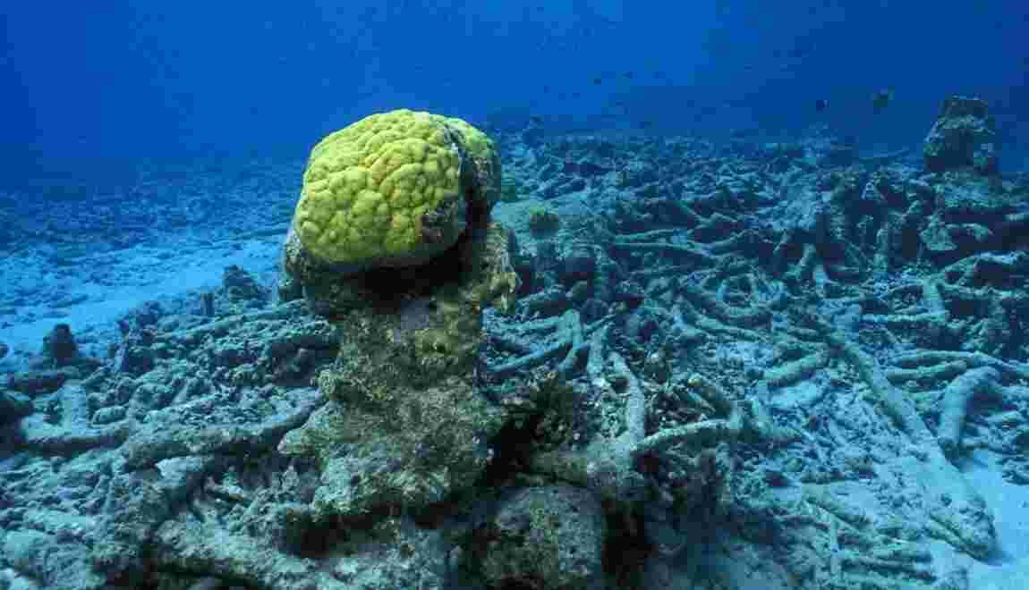 Barrières de corail : une disparition à 170 milliards de dollars