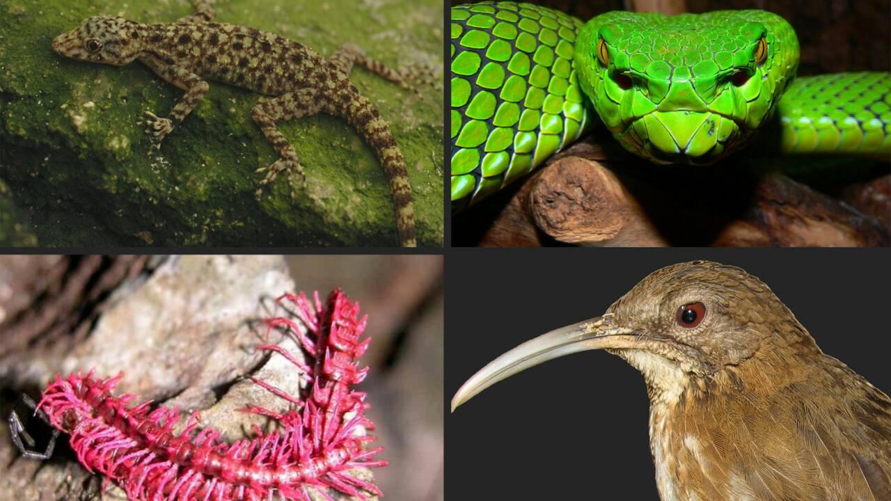 Mékong : plus de 1000 espèces découvertes en 10 ans