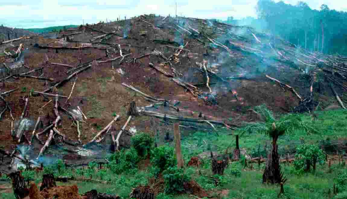 Six entreprises françaises s'engagent contre la déforestation