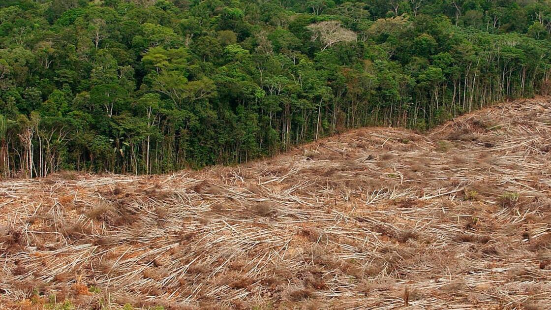 Rapport de la FAO : la déforestation s'enracine