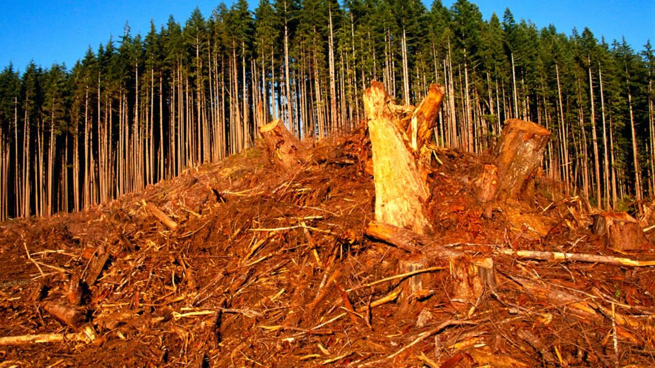 La dette écologique de l'humanité se creuse