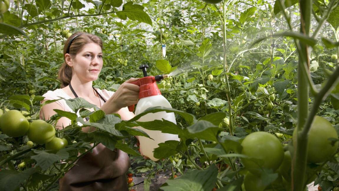 Les pesticides nocifs pour le développement du foetus