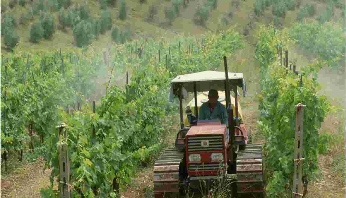 ONG vs. producteurs : le procès du raisin aux pesticides