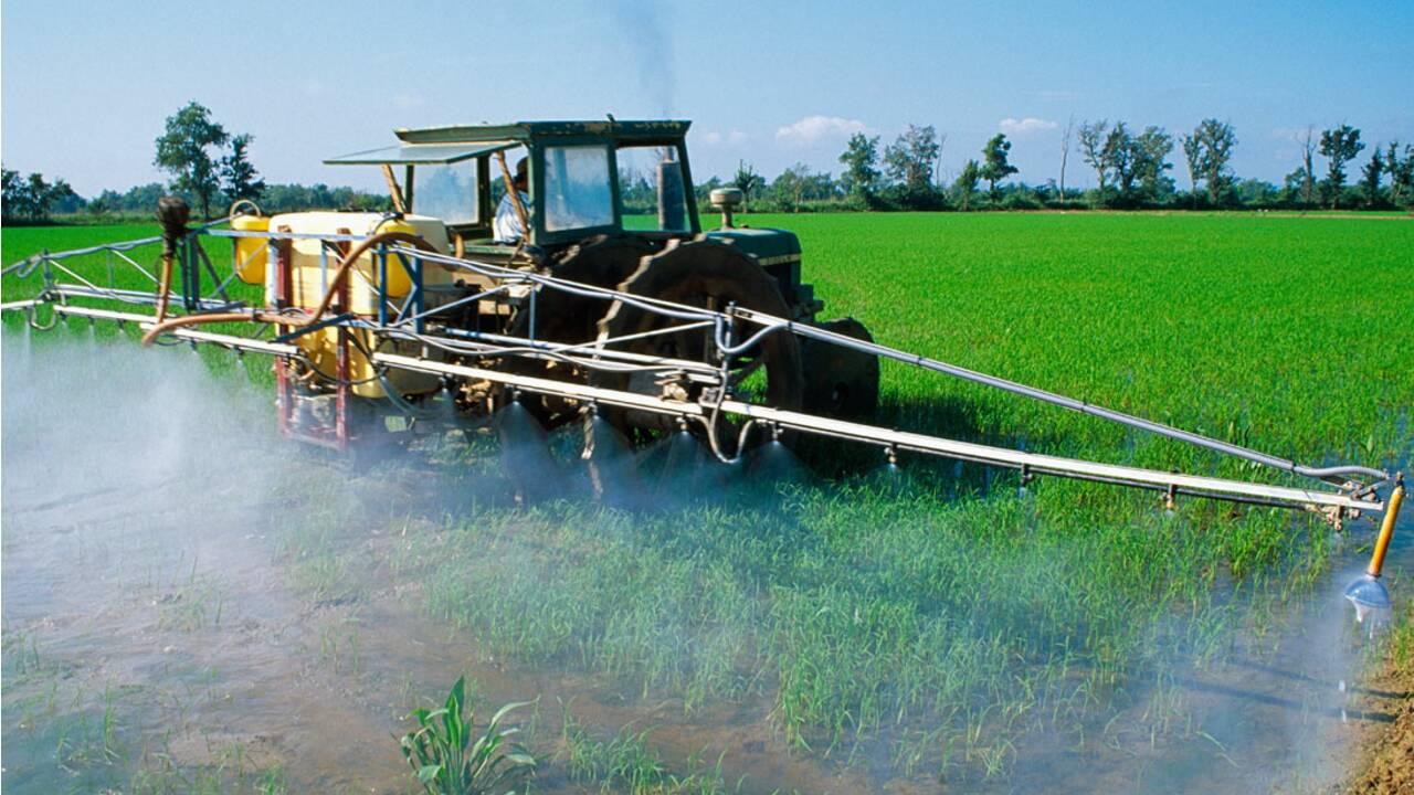 L'interdiction des pesticides : un handicap pour les agriculteurs ?