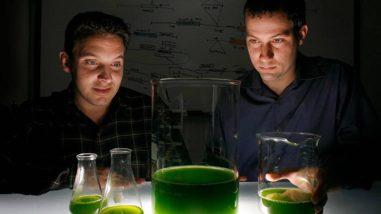 Microalgues : le biocarburant du futur ?