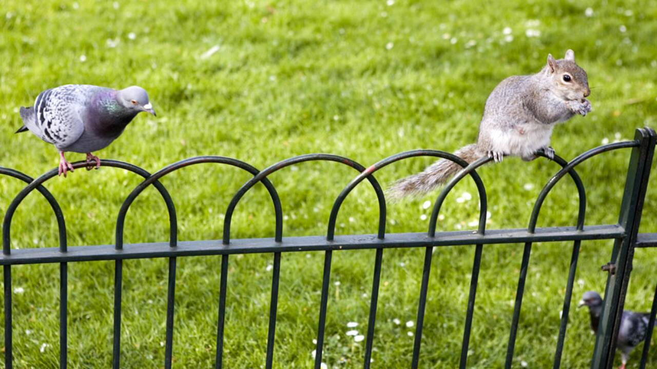 Biodiversité : quelle place dans la ville de demain ?