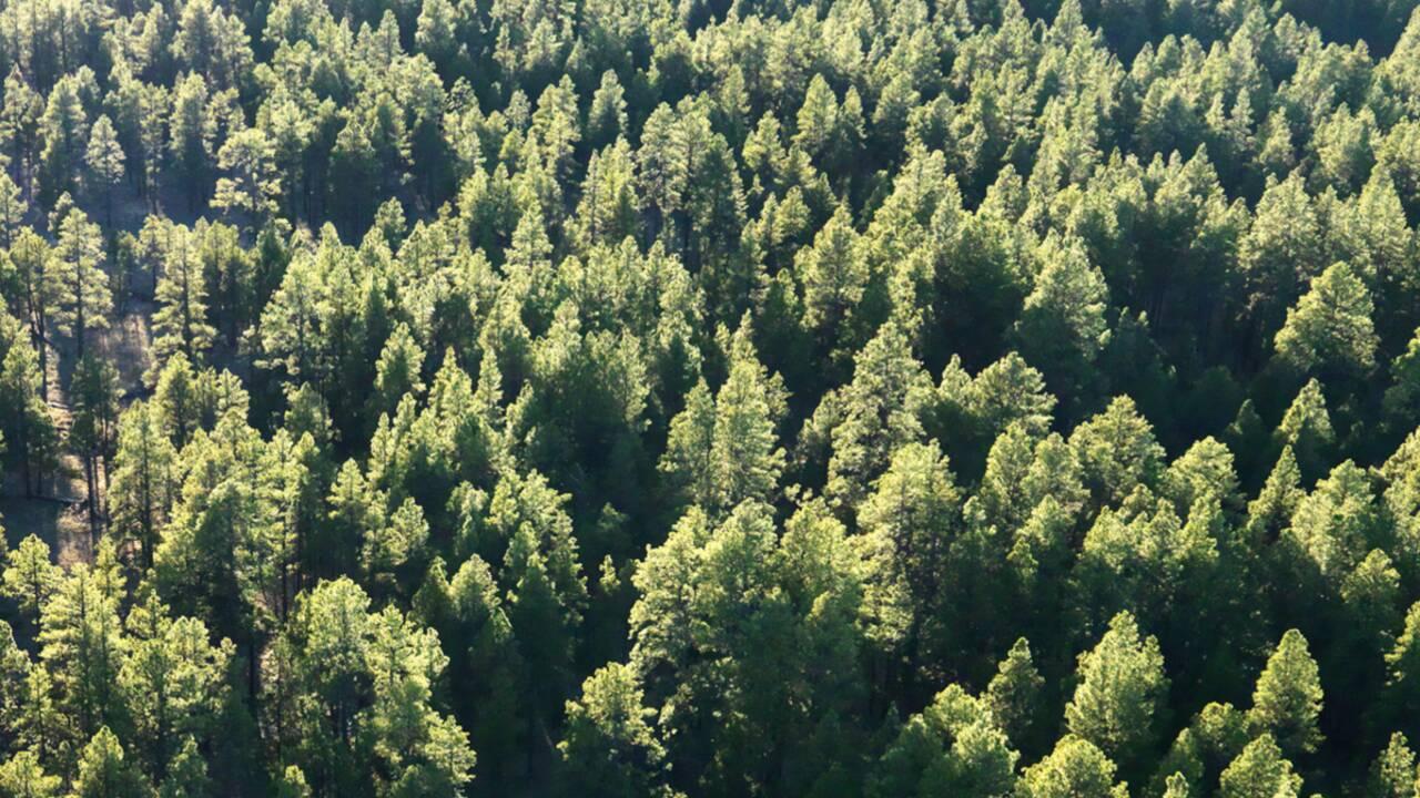 Bilan carbone® : GEO s'engage pour l'environnement