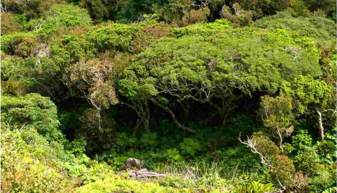 Chili : la flore menacée de l'île Robinson Crusoé