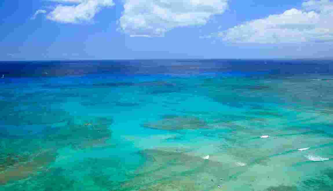 """Isabelle Autissier : """"Les océans seront plus chauds et acides"""""""