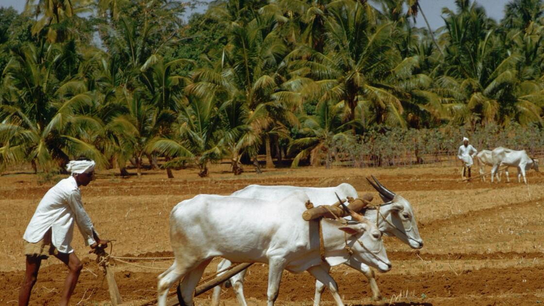 Inde : la technologie au service de l'agriculture