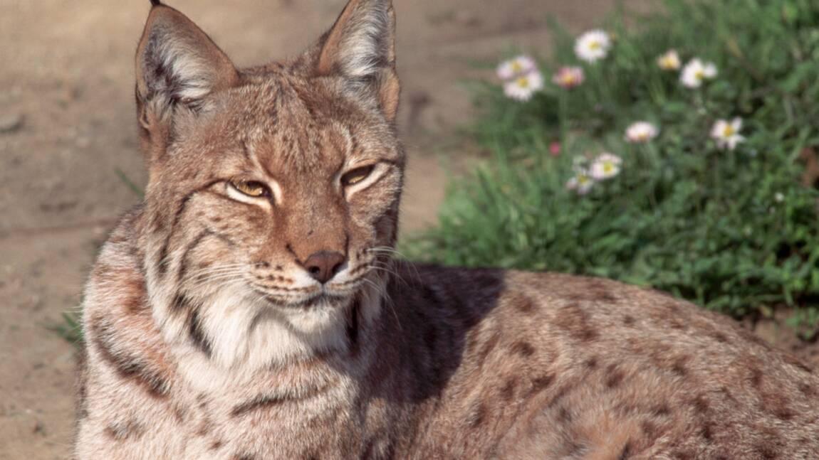 Protection de la biodiversité : l'Europe très en retard