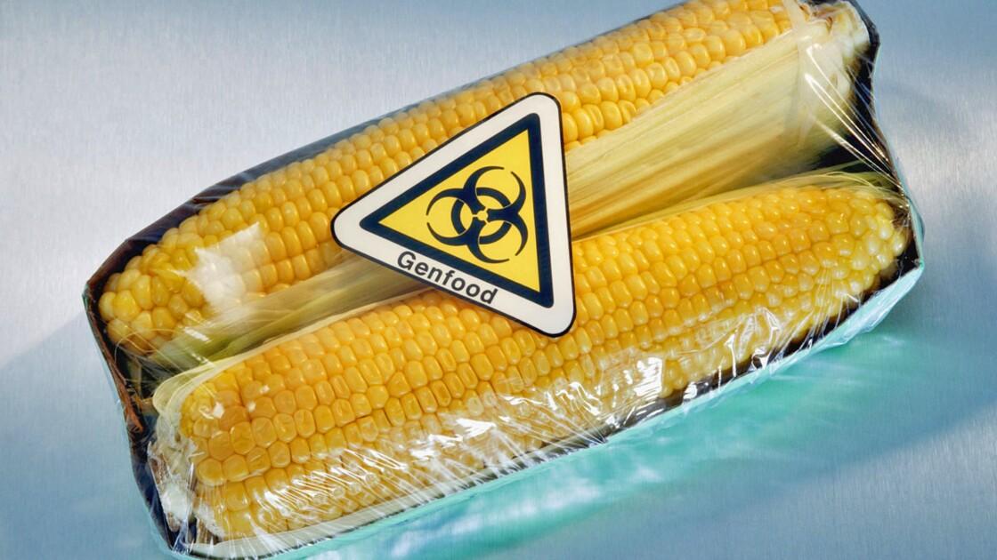 Maïs OGM : Bruxelles contre-attaque