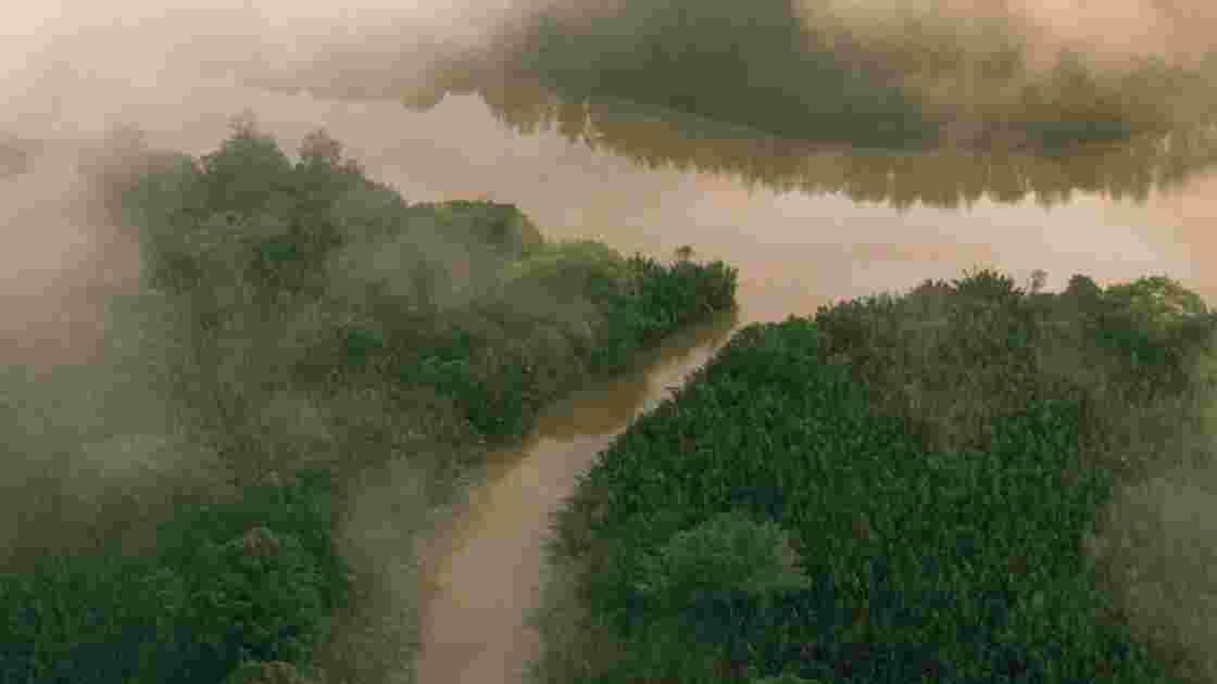 Forêts tropicales et tourbières : des puits de carbone essentiels