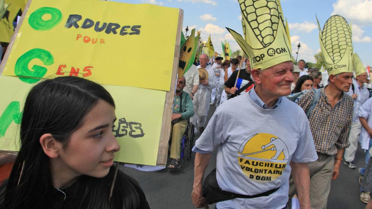 OGM : polémique sur les effets du Monsanto