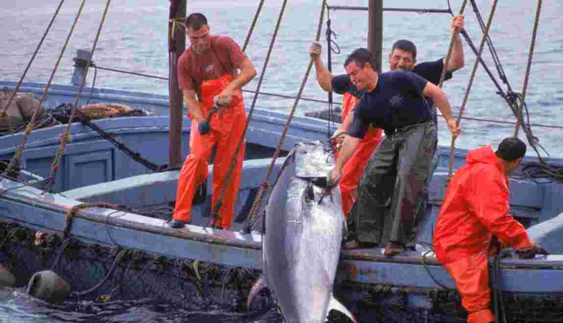 Le thon rouge condamné par l'Union européenne ?