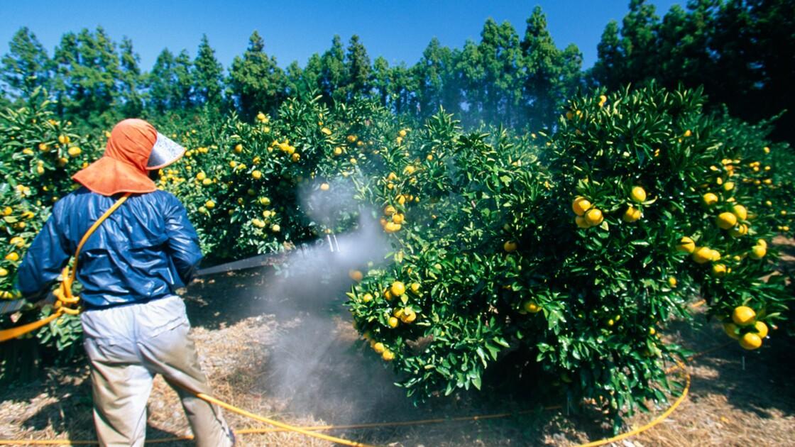 Un fruit sur deux contaminé par des pesticides