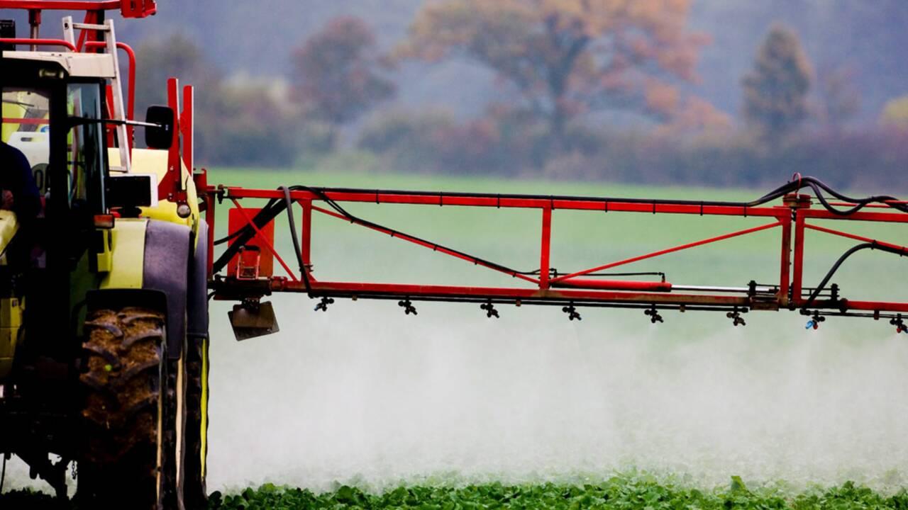 Fruits, légumes et céréales : toujours plus de pesticides en France