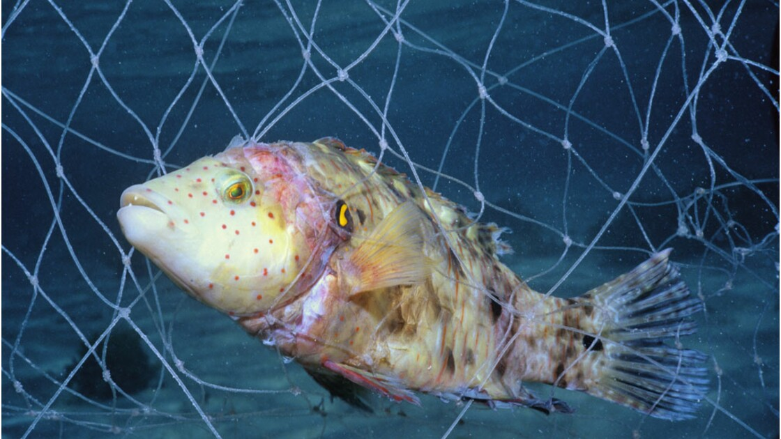 Grenelle de la mer : vers une pêche durable ?