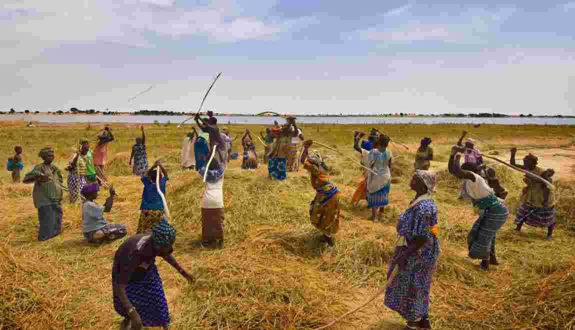 Slow Food et la FAO au chevet de l'agriculture africaine
