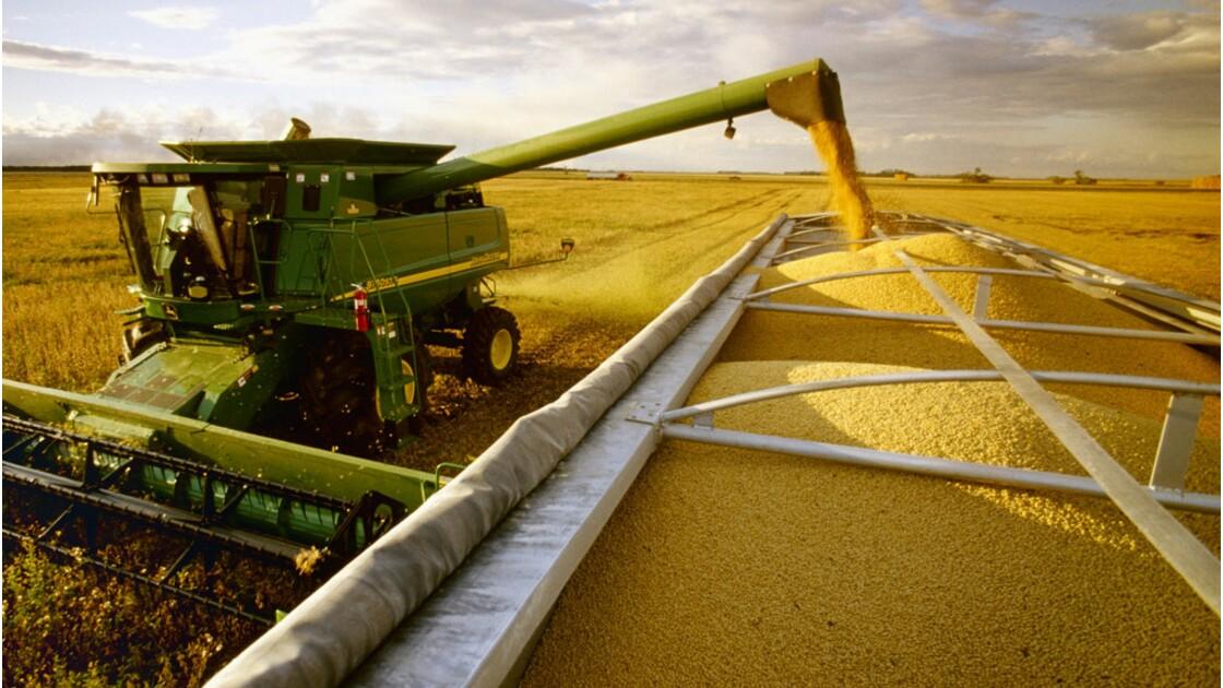 Cultures OGM : des rendements très faibles