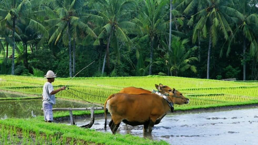 Comment mettre le tourisme au vert ?