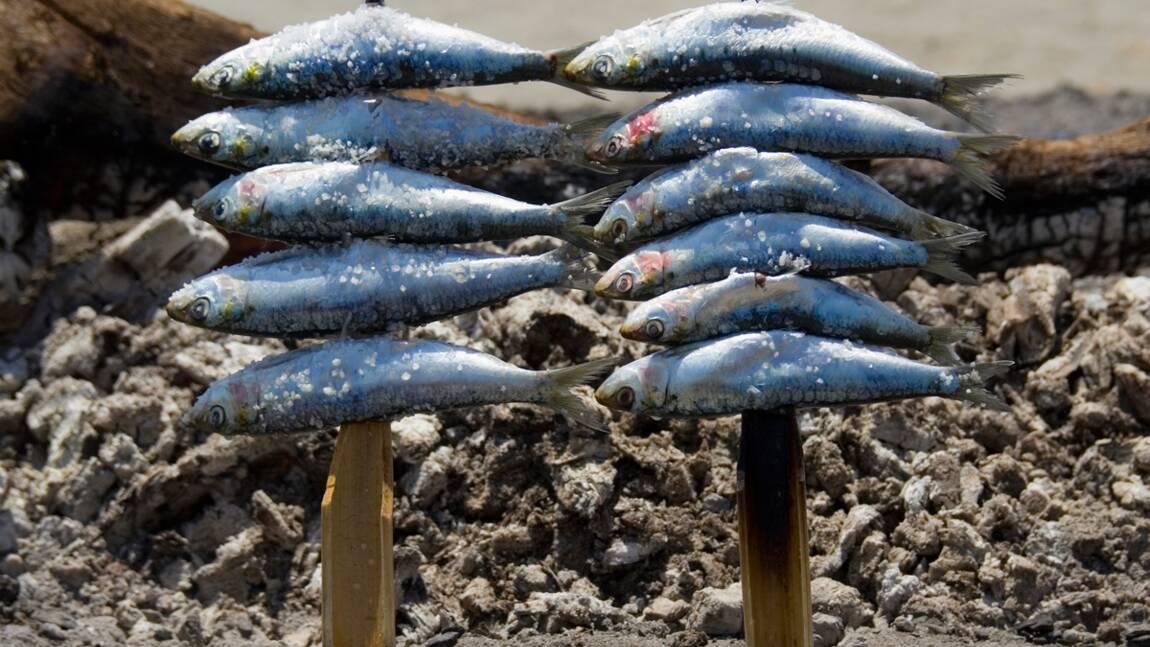 Un rapport dénonce les ravages de la surpêche