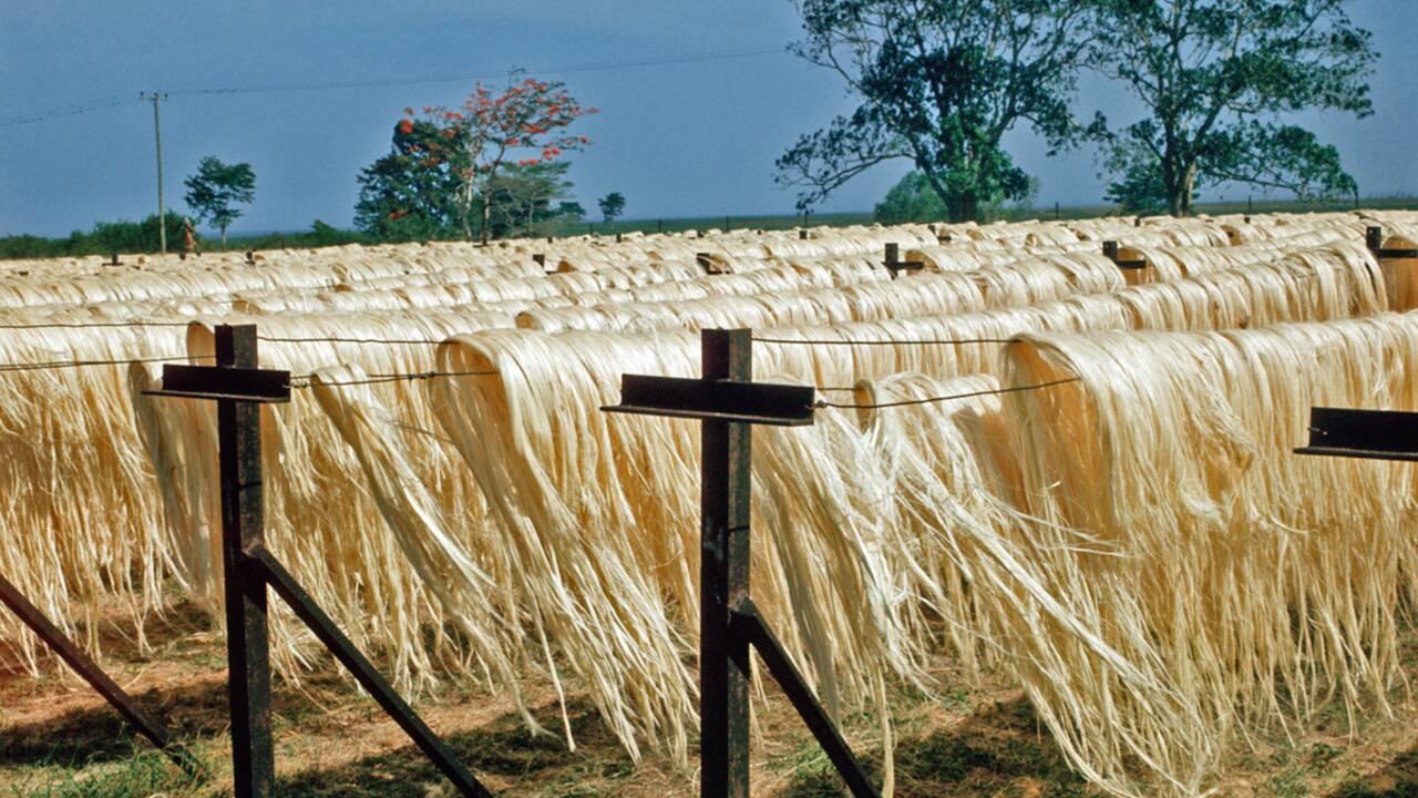 Textile : 2009 sera l'année des fibres naturelles
