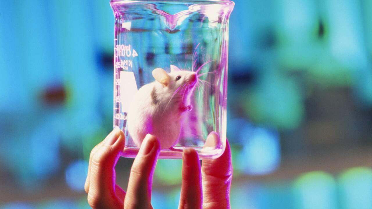 Les tests de cosmétiques sur les animaux bientôt interdits par la Corée du Sud